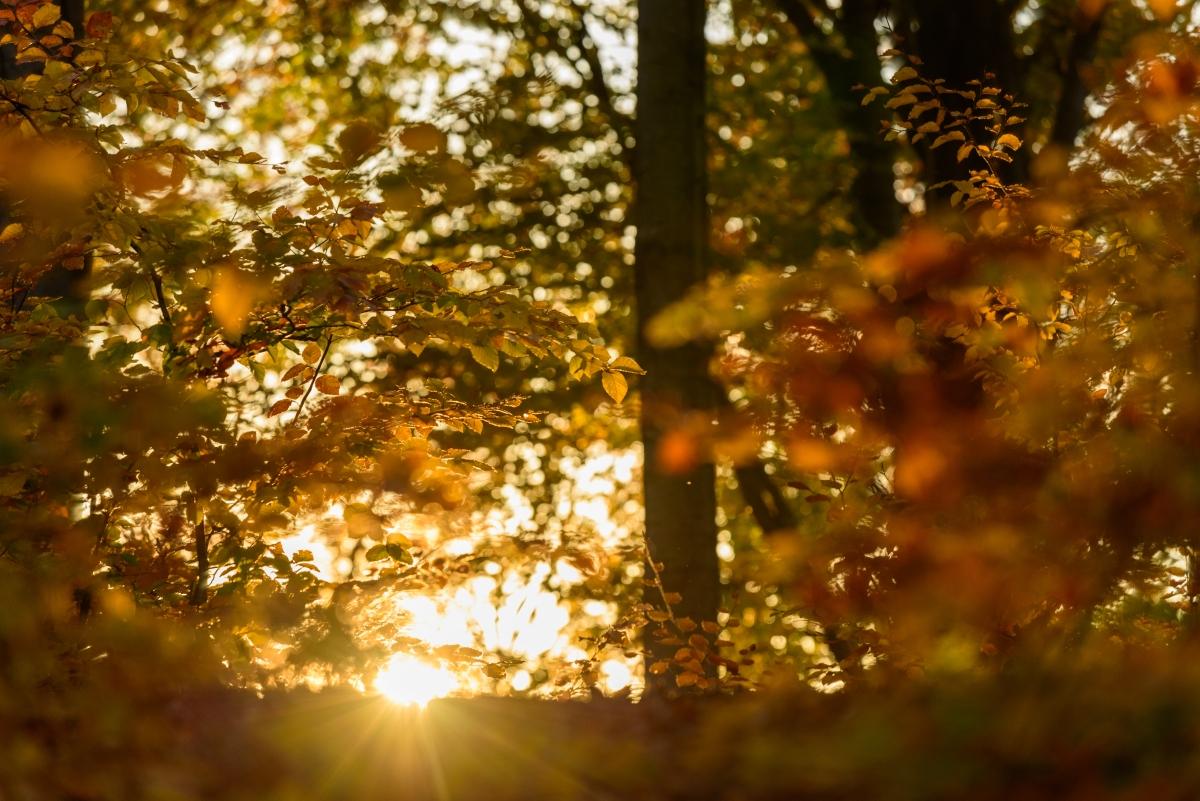 Jesień wCzarnorzecko-Strzyżowskim Parku Krajobrazowym